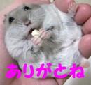IMG_13051.jpg